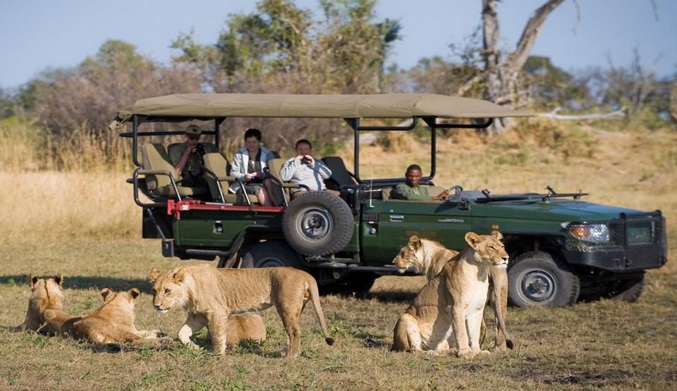 Botswana Game Drive Chobe National Park