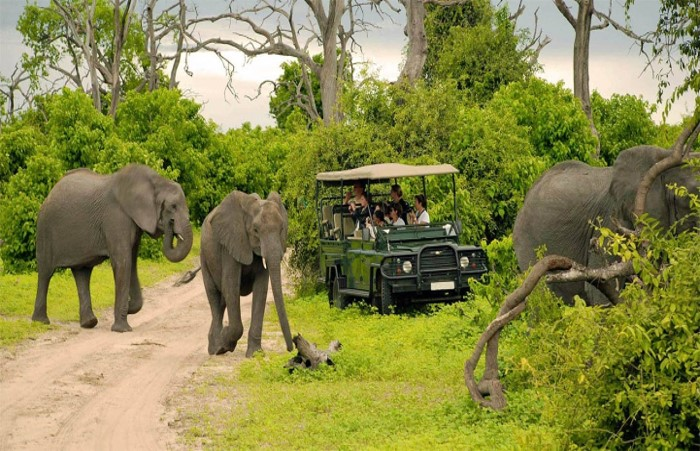 Chobe National Park Activities