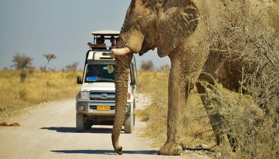 Etosha National Park - tour