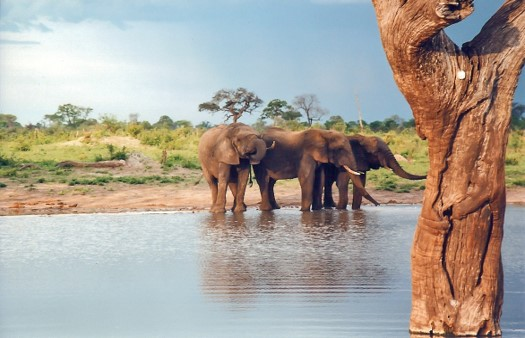 Hwange National Park down water hole