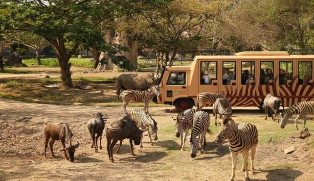 Kruger National Park Bus tour