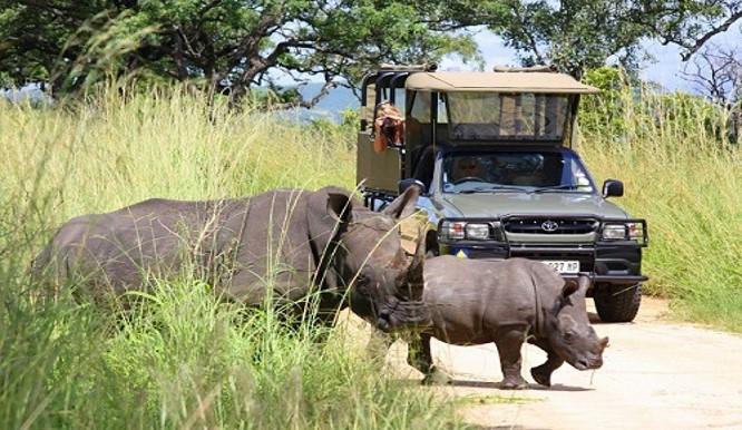 Kruger National Parks Safaris Activities