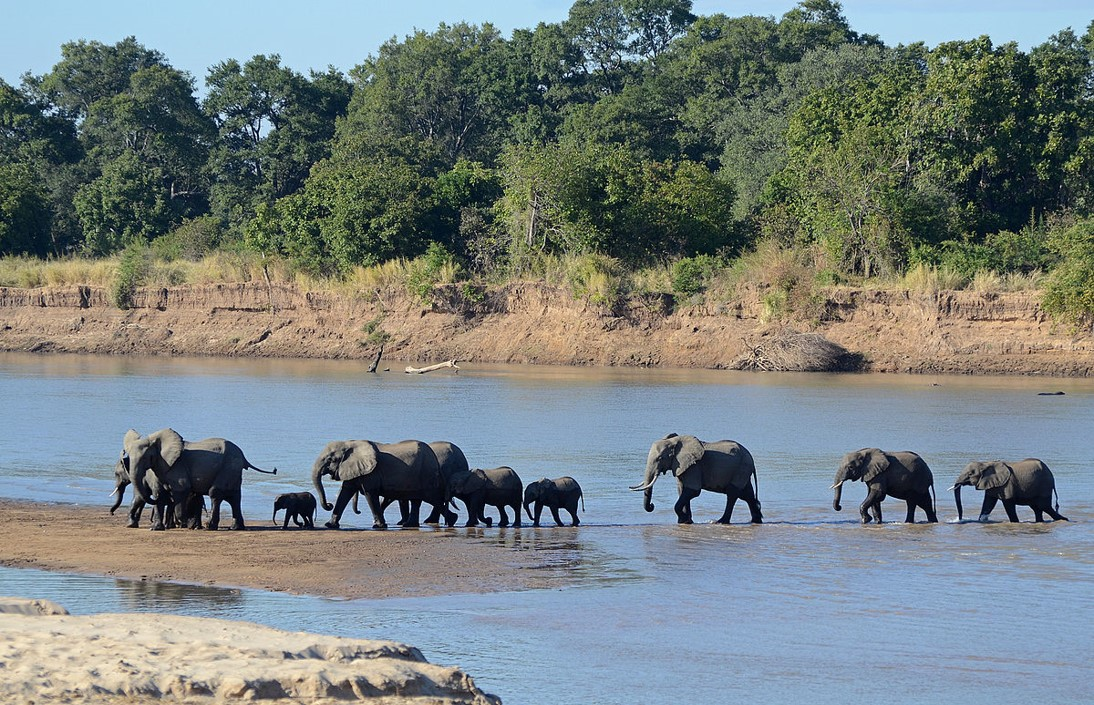 Luangwa River crossing south luangwa national park