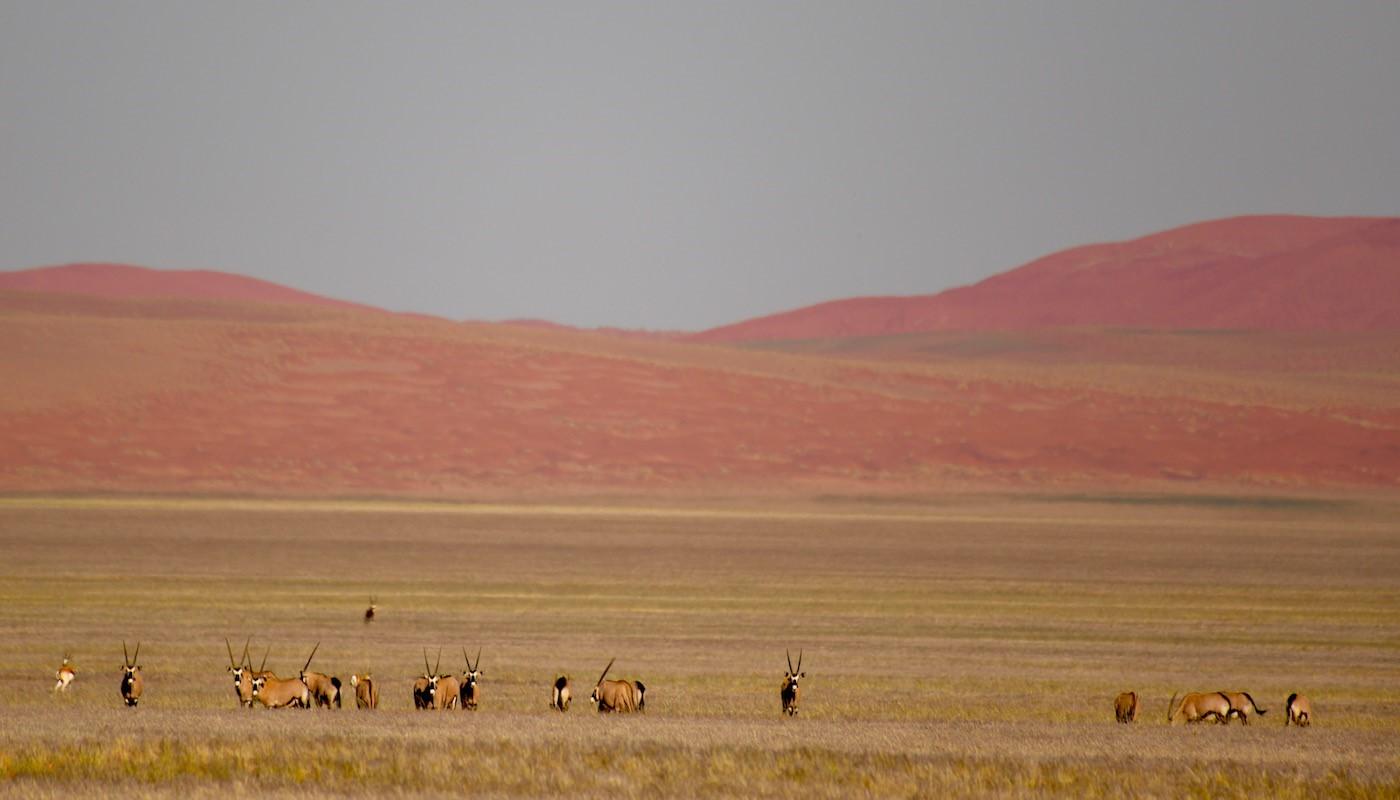 Namibia Desert - Etosha National Park