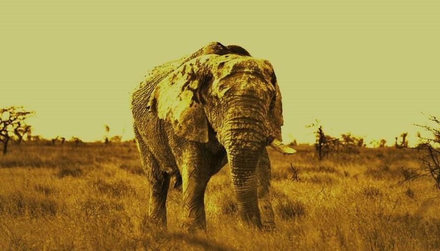 Namibia Elephant - Etosha National Park