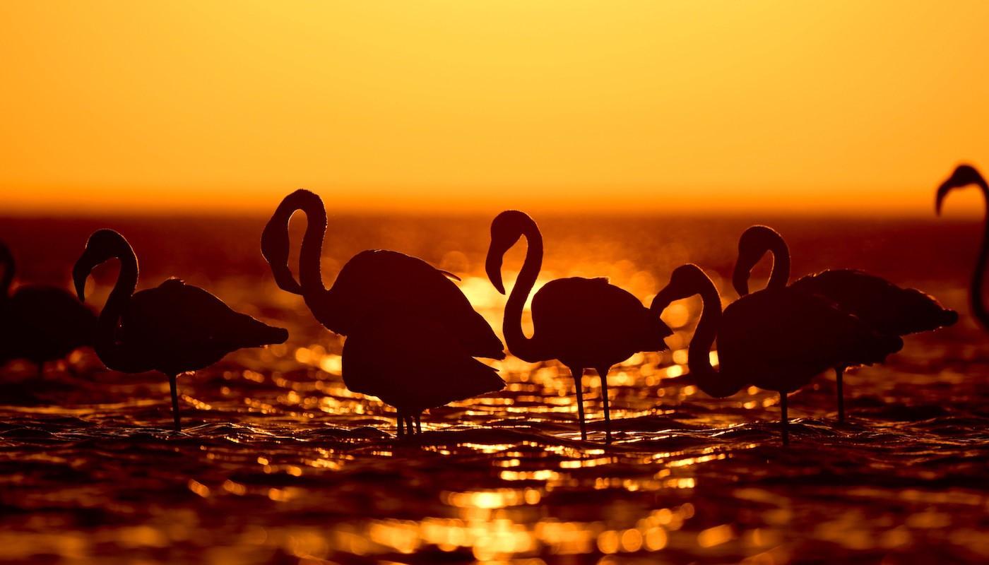 Namibia Sunset - Etosha National Park