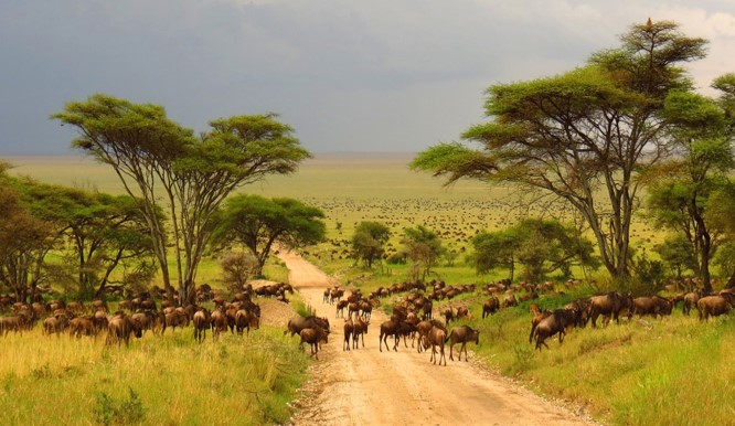 Vital Information - Kruger National Park Safari