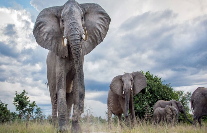 Zambia-South Luangwa Lead Courtesy Norman Carr Safaris Time and Tide Will-Burrard Lucas