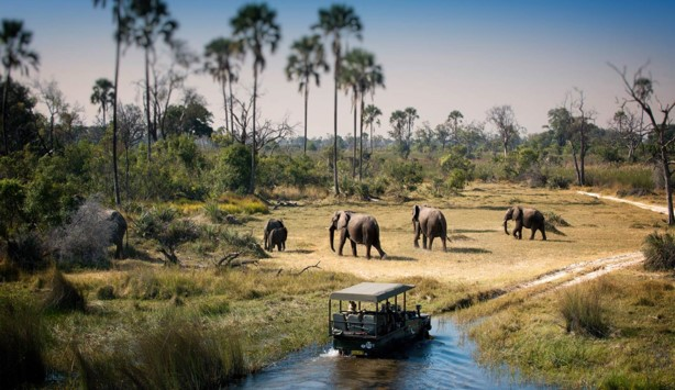 game drive Chobe National Parks