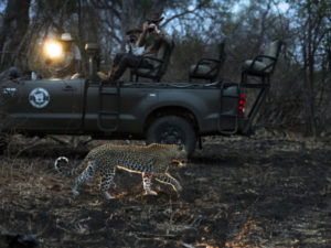 south luangwa national park Activities Night Drives