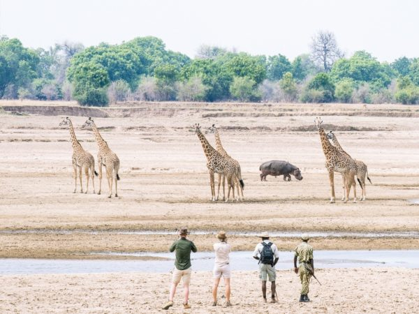 south luangwa national park Activities Hides