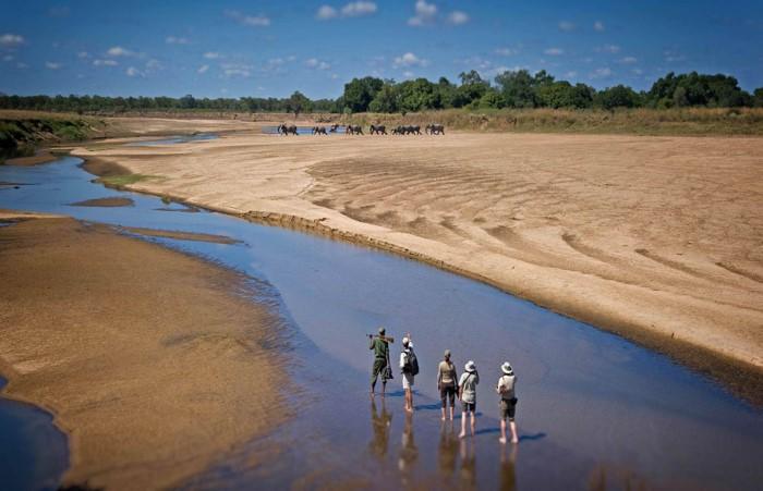south-luangwa-national-park-zambia