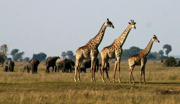 victory falls Chobe National Park
